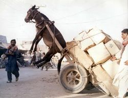 """""""Ruled by Baggage"""" - Unknown photographer"""
