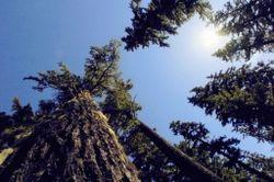 Oregon.forest