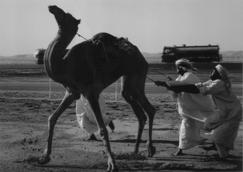 Tie_your_camel